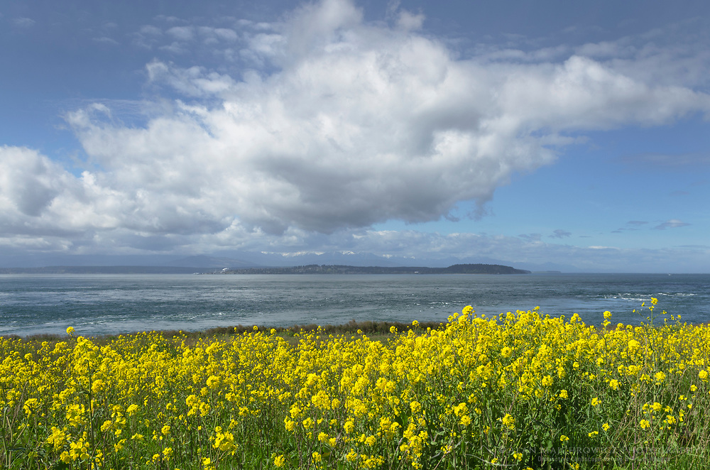 Admiralty Inlet with spring wildflowers. Viewed from Fort Casey State Park on Whidbey Island, Washington