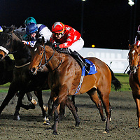 Holyfield Warrior and Mark Combe winning the 8.30 race
