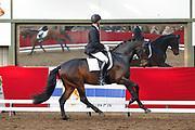 Robin van Lierop - B.A. RVL<br /> Horsefood Competitie 2010<br /> © DigiShots