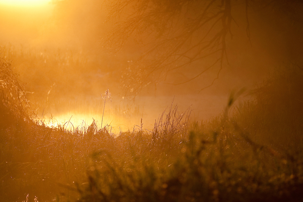 Summer snow flake (Leucojum aestivum) during sun rise, Gornje Podunavlje Special Nature Reserve, Serbia