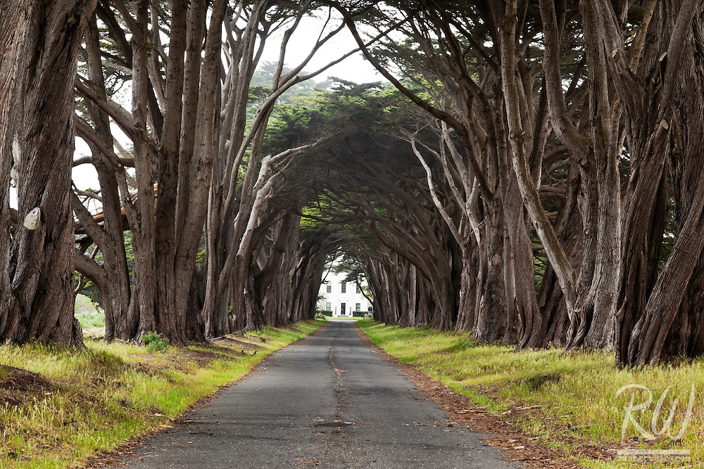 Monterey Cypress Tree Tunnel, Point Reyes National Seashore, California