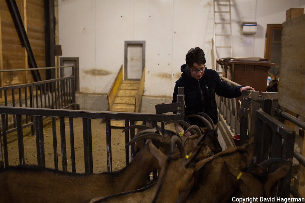 Benedetta Rebora owner of Cascina Isadora brings her herd of goats into the milking barn.