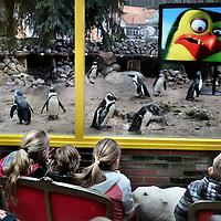 Nederland, Amersfoort , 25 maart 2015.<br /> Dierenpark Amersfoort.<br /> &ldquo;mini-eventje&rdquo; waarbij Pinguins op een scherm met aanwezige kindjes naar de film Penguins gaan kijken. FOX.<br /> Foto: ANPinOpdracht/Jean-Pierre Jans