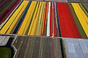 Nederland, Noord-Holland, Schermer, 28-04-2010; Polder De Schermer met bloembollenvelden, tulpen en narcissen. In verband met het weer, nachtvorst en droogte, zijn sommige velden afgedekt met landbouwplastic..The Schermer polder with bulb fields, tulips and daffodils. Due to weather, frost and drought, some fields are covered with agricultural plastic.luchtfoto (toeslag), aerial photo (additional fee required).foto/photo Siebe Swart.