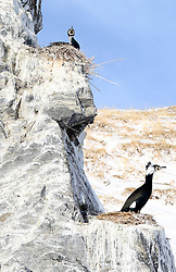 Cormorants are seen on the rock of an island on the Qinghai Lake in northwest China's Qinghai Province, April 15, 2016. Qinghai Lake, covering 4,400 square kilometers, is China's largest inland salt lake. EXPA Pictures © 2016, PhotoCredit: EXPA/ Photoshot/ Xing Zhi<br /> <br /> *****ATTENTION - for AUT, SLO, CRO, SRB, BIH, MAZ, SUI only*****