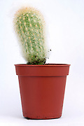hairy cactus plant against a white backdrop