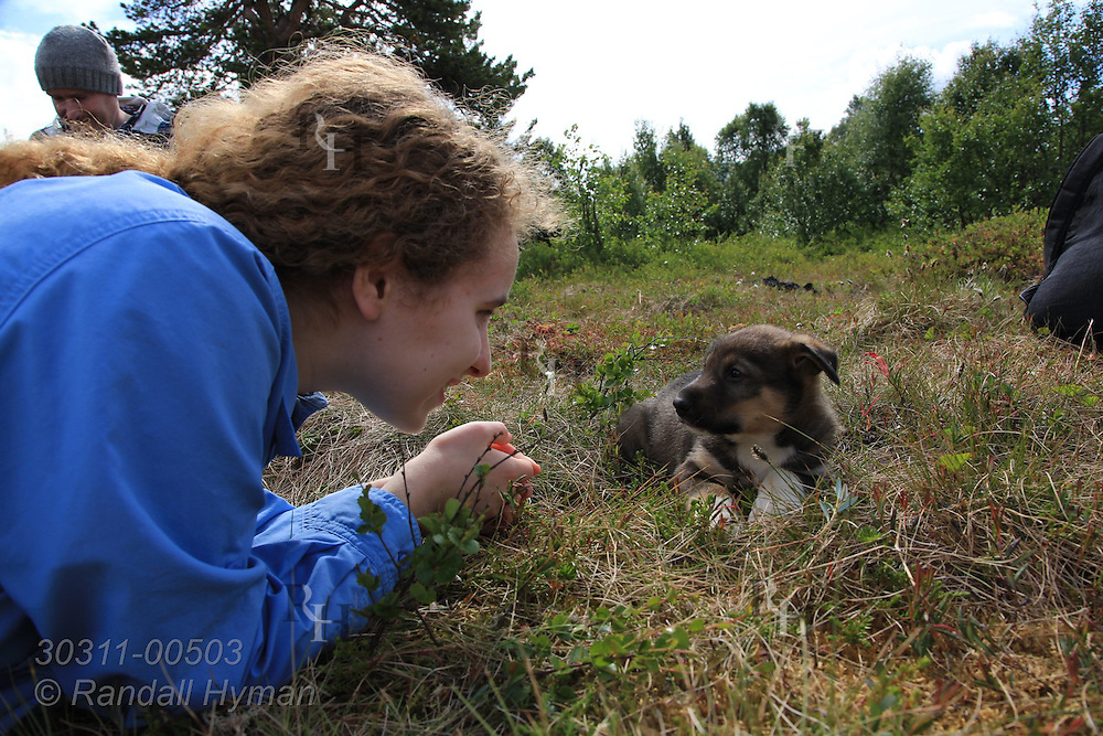 Soley Hyman plays with puppy on its first summer outing away from mother at the Tromso Villmarkssenter sled dog center on Kvaloya Island outside Tromso, Norway.