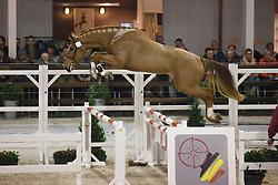 081 - Clovis D Altenbach<br /> Hengstenkeuring BWP - Azelhof - Koningshooikt 2015<br /> ©  Dirk Caremans