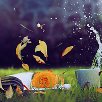 Photography of a book with a rose and floating leaves and a water splash in a cup