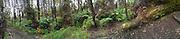 Risdon Photo Panoramic Images