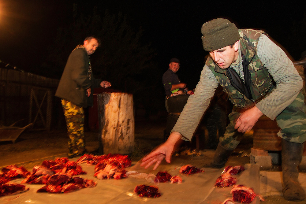Romanian hunters preparing the meat of a female Wild boar (Sus scrofa) that was shot during a driving hunt to share between all participants of the hunt. Mehadia, Caras Severin, Romania.