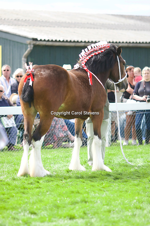 Mr &amp; Mrs F &amp; J Pickles' Bay Filly<br /> Laurel Bank Scarlet<br /> Sire  Wheathead Bowes Lyon<br /> 3rd  2yr old Filly or Gelding Class