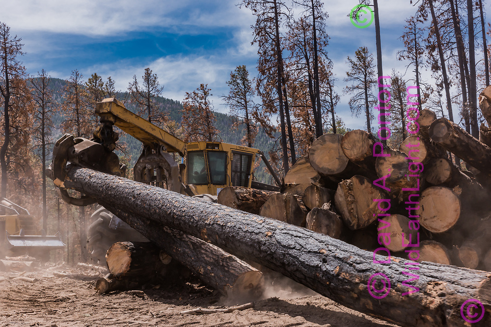 Log skidder drags a fire-blackened salvaged log onto a pile, all salvaged, from the El Cajete Fire burned area about 1 year after the 2017 fire. Fire-killed trees are still standing in the background. © 2018 David A. Ponton