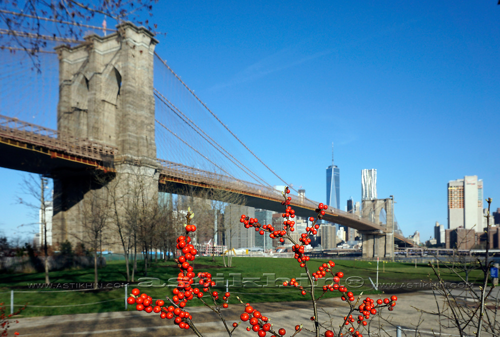 Morning in Brooklyn Bridge Park.