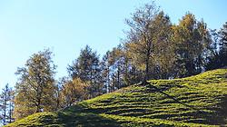 THEMENBILD - herbstlich gefärbte Bäume an einem sonnigen Herbsttag, aufgenommen am 22. Oktober 2015, Innsbruck, Österreich // autumnal colored trees on a sunny Autumn Day, Innsbruck, Austria on 2015/10/22. EXPA Pictures © 2015, PhotoCredit: EXPA/ Jakob Gruber