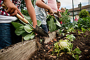 Comunity Garden Project for Fingal County Council, Blanchardstown, July 2010.