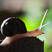 onefoot snail farm - 2013