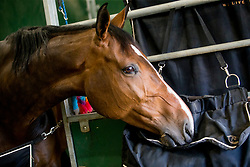 Lucky Luke de Goedereede<br /> Knokke Hippique 2019<br /> © Hippo Foto - Sharon Vandeput<br /> 30/06/19