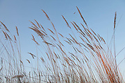 Grasses in the wind, Kwetsani.
