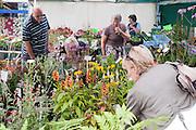 Truro Flower Market 02