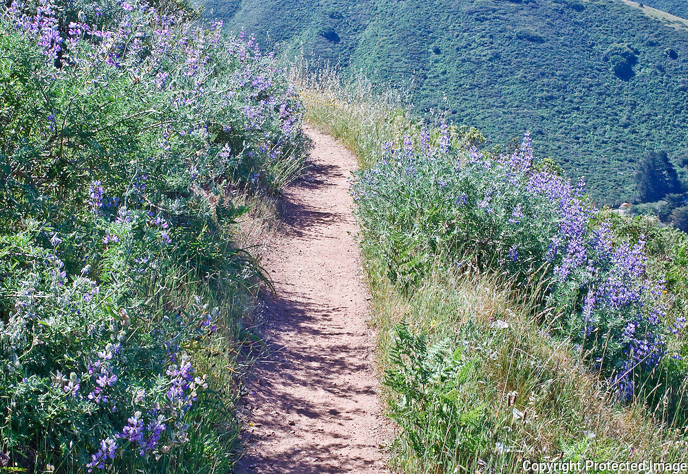 Wildflowers along the trail in Golden Gate National Recreation Area