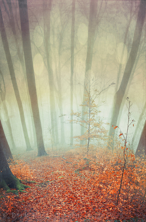 Forest shrouded in fog<br />