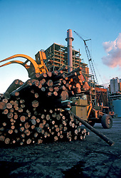 Stock photo of heavy machinery moving cut logs from a giant stack