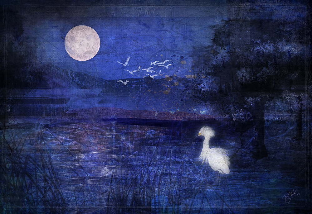 Mysterious inky blue night scene with a lone white egret looking out at the full moon reflection in the water
