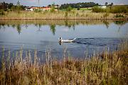 """English Setter Welpe """"Rudy"""" am 19.09. 2017 im Teich von Stara Lysa, (Tschechische Republik).  Rudy wurde Anfang Januar 2017 geboren und ist vor einiger Zeit zu seiner neuen Familie umgezogen."""
