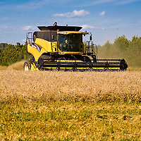 A yellow New Holland harvester cutting and harvesting barley under a blue sky.