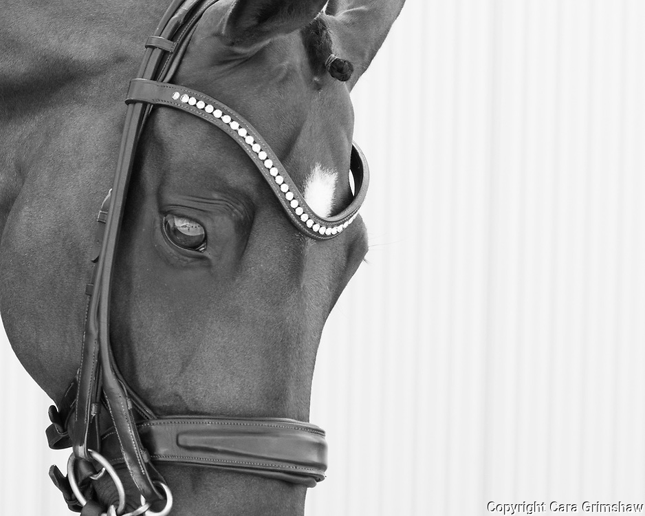 Team Canada Dressage - CHIO Aachen, Germany July 22 2017