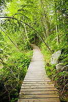 Boardwalks through sensitive ecosystems help to preserve the lush forest on Vancouver Island for everyone.  Tahsis, Vancouver Island, British Columbia, Canada.