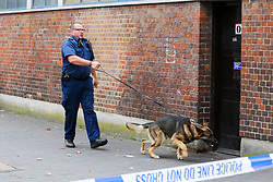 © Licensed to London News Pictures. 22/09/2019. London, UK. A police officer with a police dog on Langham Road in North London near Turnpike Lane underground and bus station where three men were stabbed and rushed to hospital. Met police were call shortly after 4pm this afternoon to Langham Road and found three men suffering from stab wounds. According to the Met Police, two men have been arrested on suspicion of GBH. Photo credit: Dinendra Haria/LNP
