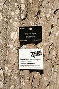 Tree species identification label, National arboretum, Westonbirt arboretum, Gloucestershire, England, UK - Black poplar, Populus Nigra
