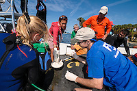 Manatee Health Assessments, Kings Bay, Crystal River, Citrus County, Florida USA. November 10, 2011 pm. Researchers from several federal and state agencies and other partners work together to gather data during the manatee capture and health assessments. A Manatee Rescue boat is used as a platform while a researcher scans for succesful insertion of a passive integrated transponder (PIT) tag. Grease pencil marks designate a field ID number and sex of the animal. The manatee is only out of the water for a pre-determined safe period of time. Project Leader, Dr. Robert K. Bonde, oversees.