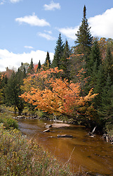 Early fall color along the Ham branch of the Gale River, Franconia, New Hampshire.