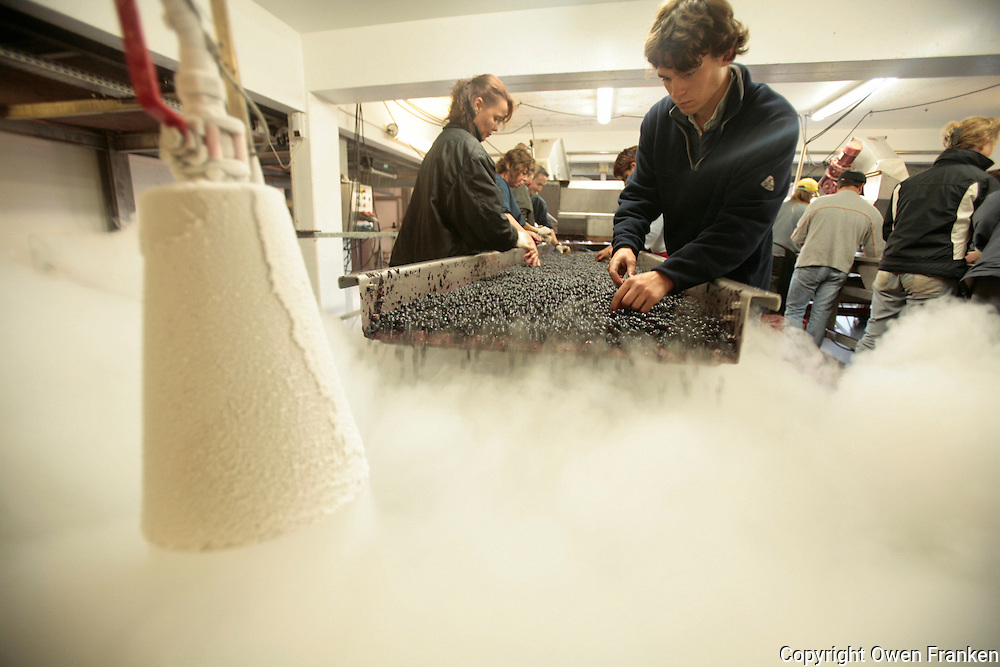 "Chateau Lascombes in Margaux, the Medoc, near Bordeaux..treating the harvested grapes with dry ice to cool them so that they macerate without fermenting..the process, called ""cold maceration,"" keeps them cold for eight days.....October 4, 2006..Photograph by Owen Franken for the NY Times."
