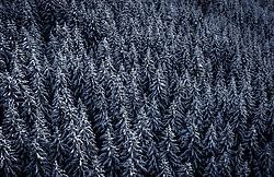 THEMENBILD - mit Schnee bedeckte Bäume, aufgenommen am 30. Januar 2020 in Kaprun, Österreich // snowcapped trees, Kaprun, Austria on 2020/01/30. EXPA Pictures © 2020, PhotoCredit: EXPA/ JFK