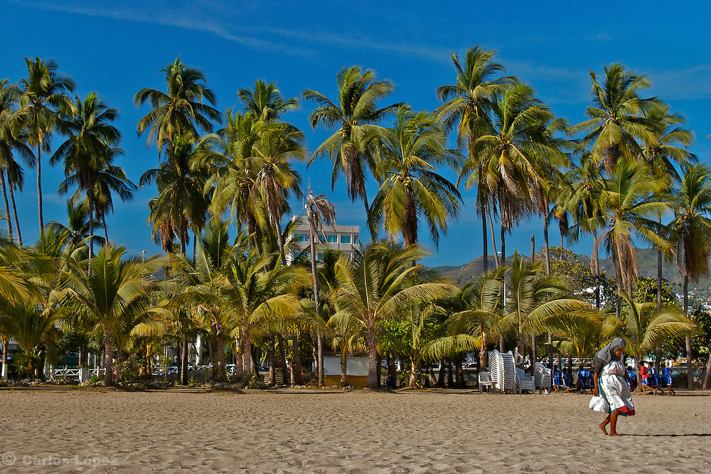 A group of palm trees in a beach of Acapulco, Mexico, where an old woman is passing by.