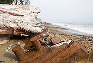 West Coast Trail - Day 2.  The remains of a ship lie next to a massive tree that died long ago.