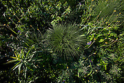ICF_Prairie.-Prairie Dropseed (Sporobolus heterolepis), rounded clump of prairie grass. The International Crane Foundation's (ICF) mission is to conserve cranes and the ecosystems, or landscapes, on which they depend. In 1980 ICF began restoring native prairie, savanna, wetland, and woodland communities on the newly acquired 160 acre property north of Baraboo, Wisconsin.  The site now serves as an outdoor laboratory with over 100 acres of restored landscapes alongside another 60 acres of natural landscape, where the process of restoration can be explored and the lessons applied worldwide.
