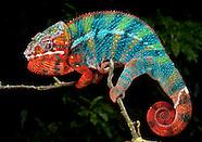 Kamaflage Kreations