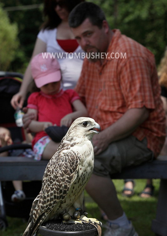 Bloomingburg, New York - People watch a gyrfalcon on its perch while a falconer talks about the bird at a farm on June 20, 2010. The gyrfalcon is the largest falcon in the world and inhabits arctic regions.
