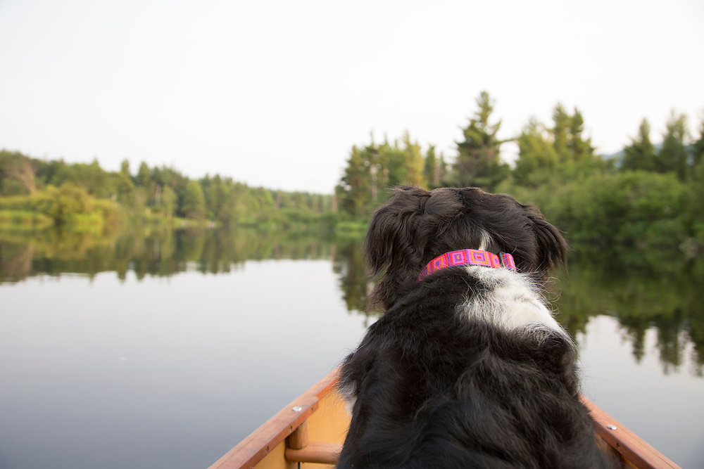 Blacka nd white dog in a boat from POV of owner