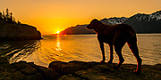 A dog looks over Turnagain Arm as the sun sets near Hope, Alaska Saturday evening.