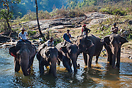 Mahouts (Elephant caretakers)