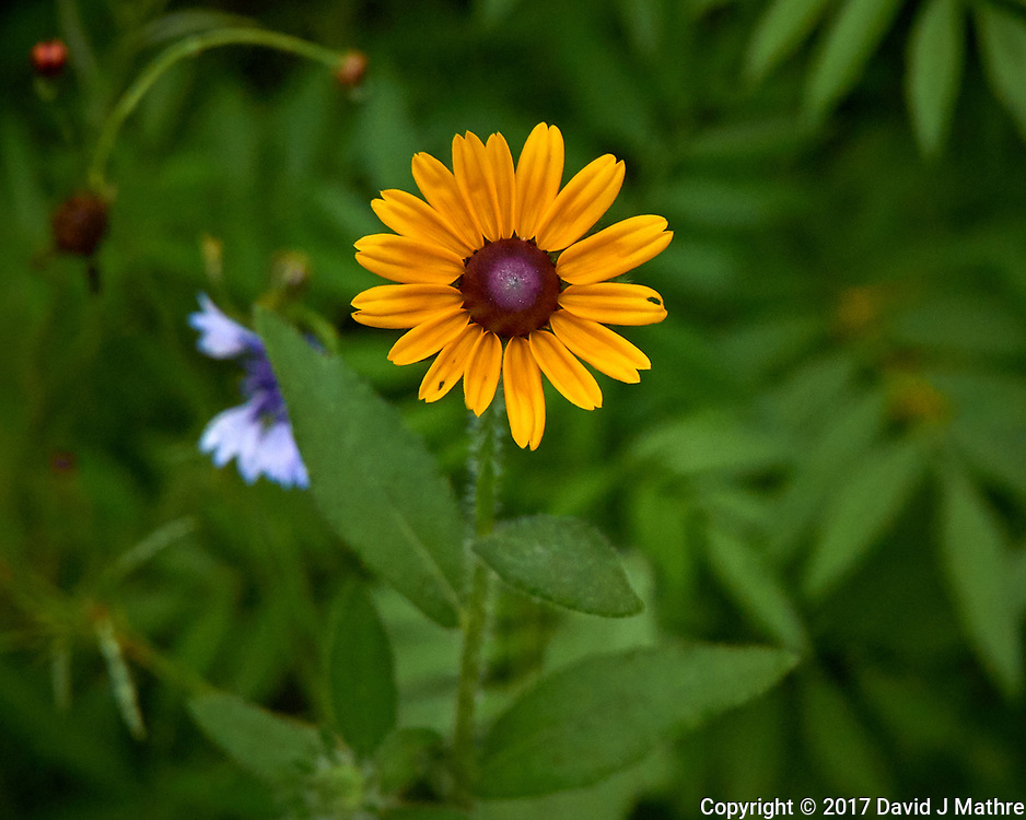 Backyard summer nature in New Jersey. Image taken with a Leica T camera and 55-135 mm lens