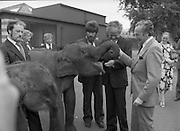 Baby Elephants presented To Dublin Zoo.  (M82)..1979..18.07.1979..07.18.1979..18th July 1979..H.B. Ice Cream yesterday presented two baby elephants from Thailand to the Zoological Gardens, Phoenix Park, Dublin..In acknowledging the gift, Mr Terry Murphy,Director of the Zoo, said that they had been without an elephant of their own for some time. The one currently there was on loan from a zoo in England and would be returned there shortly.. Hearing this H B decided to sponsor the importation of the two young elephants from Bangkok, Thailand..Image shows Mr Ted Murphy feeding tid bits to one of the elephants as a happy Mr Terry Murphy and other zoo staff look on.