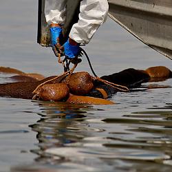 06-15-2010 Oil Spill Impact
