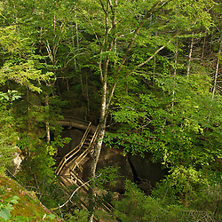 The walkway in the forest in Lost River Gorge in New Hampshire's White Mountains. North Woodstock.